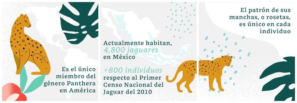La conservación del jaguar como legítima defensa del Tren Maya